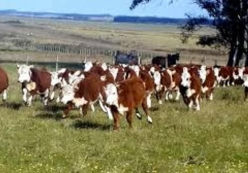 Formalizan a 13 personas implicadas en robo de ganado